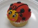 Domed Ladybugs